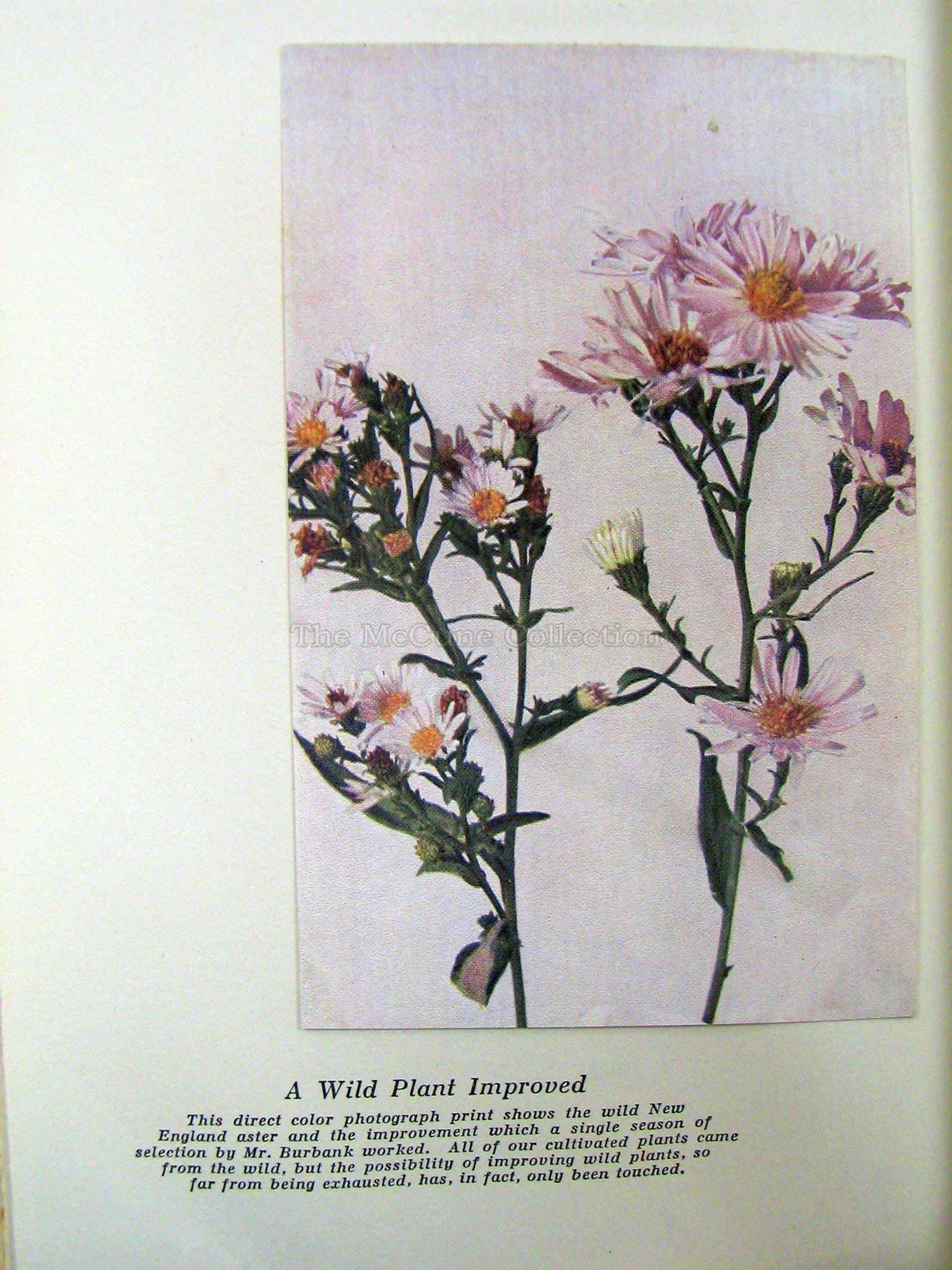 Index of /images/Luther Burbank - Volume 1